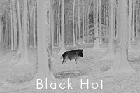 Black Hot